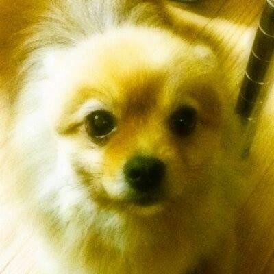 くすみ弐式 Social Profile