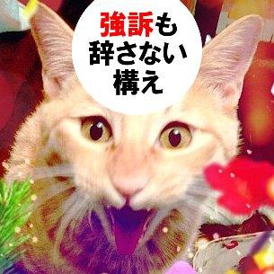 ネコフグリスタ・ダダ子 Social Profile