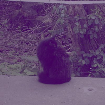 critter8875 | Social Profile