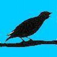mattwardman | Social Profile