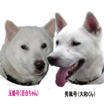高橋朗風 Social Profile