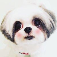 濱田マサル | Social Profile