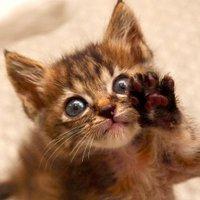 りょう吉(猫モノ作ってます) | Social Profile