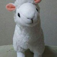torachan【我亦在彼摂取中】 | Social Profile