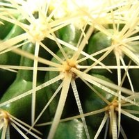 KaktusStgtt