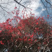 chihiro tsukada | Social Profile