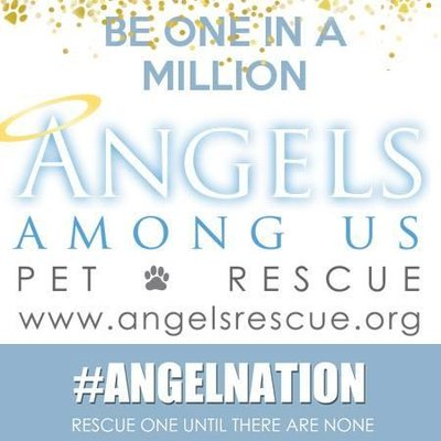 Angels Pet Rescue | Social Profile