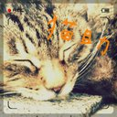 猫助@Sercu