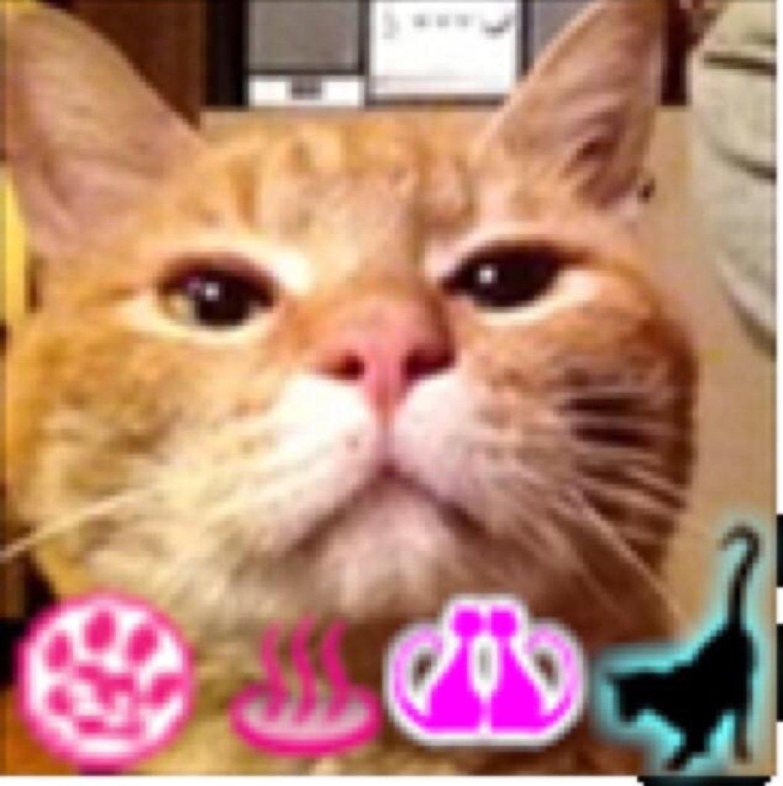 とらのこ  (゚-、゚) Social Profile