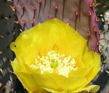 Rivenrock Gardens Social Profile