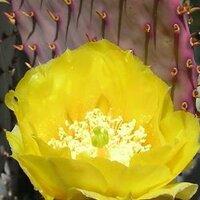 Rivenrock Gardens | Social Profile