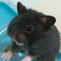 ぬーり | Social Profile
