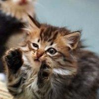 AK_news_kitten