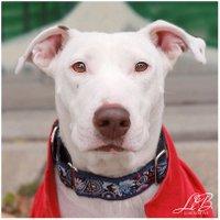 Dog Portraits by LLB | Social Profile