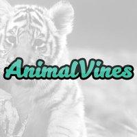 TheAnimalVines