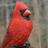 @BirdsofVermont