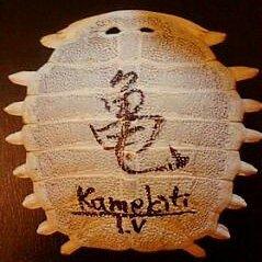 カメ吉TV | Social Profile