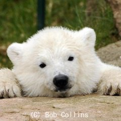群馬のクマ | Social Profile