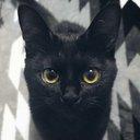 黒猫くくと三毛むぎ