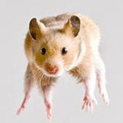 Flying_Rodent Social Profile