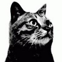 吉田隆一/黒羊㌠ | Social Profile