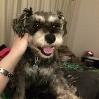 Archie - Shadow Fur | Social Profile
