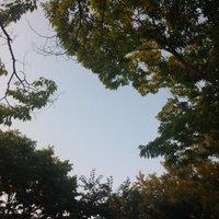 커피나무 | Social Profile