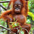 @ProbWithPalmOil
