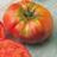 pamela kennedy-buck | Social Profile