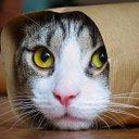 まこ♥ネコ大好き神@相互フォロー (@007Komokomoji) Twitter