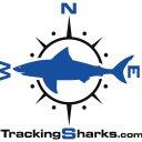 Tracking Sharks