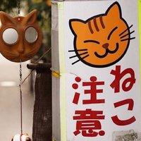 SA☆HO | Social Profile