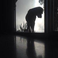 pezquefuma | Social Profile