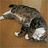 catwhisk