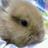 The profile image of memifu