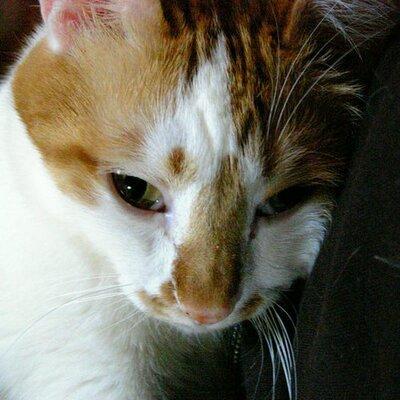 Kiyoko. Isobe | Social Profile
