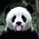 panda (@001banda) Twitter