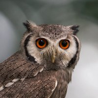 The Owl | Social Profile