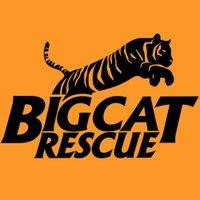 Big Cat Rescue | Social Profile
