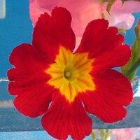 牧山雪華 | Social Profile