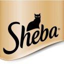 Photo of ShebaUK's Twitter profile avatar
