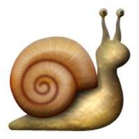 snailracingg