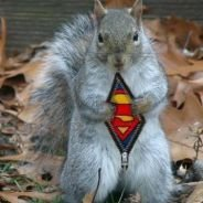 Syk squirrel sqaud | Social Profile