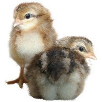 poultrykeeper.com | Social Profile