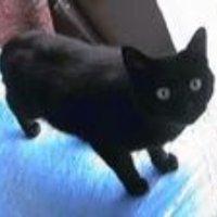 黒猫屋 | Social Profile
