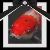 鯉は気まぐれ | Social Profile