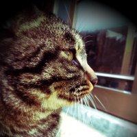 Kazuya | Social Profile