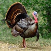 @TurkeyLinux