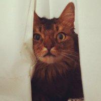 ザザ。ぴょん | Social Profile