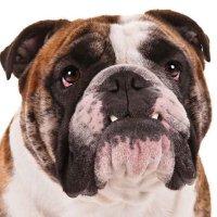@Bulldog